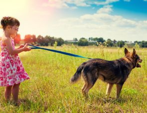 Little girl with big dog walking on the meadow